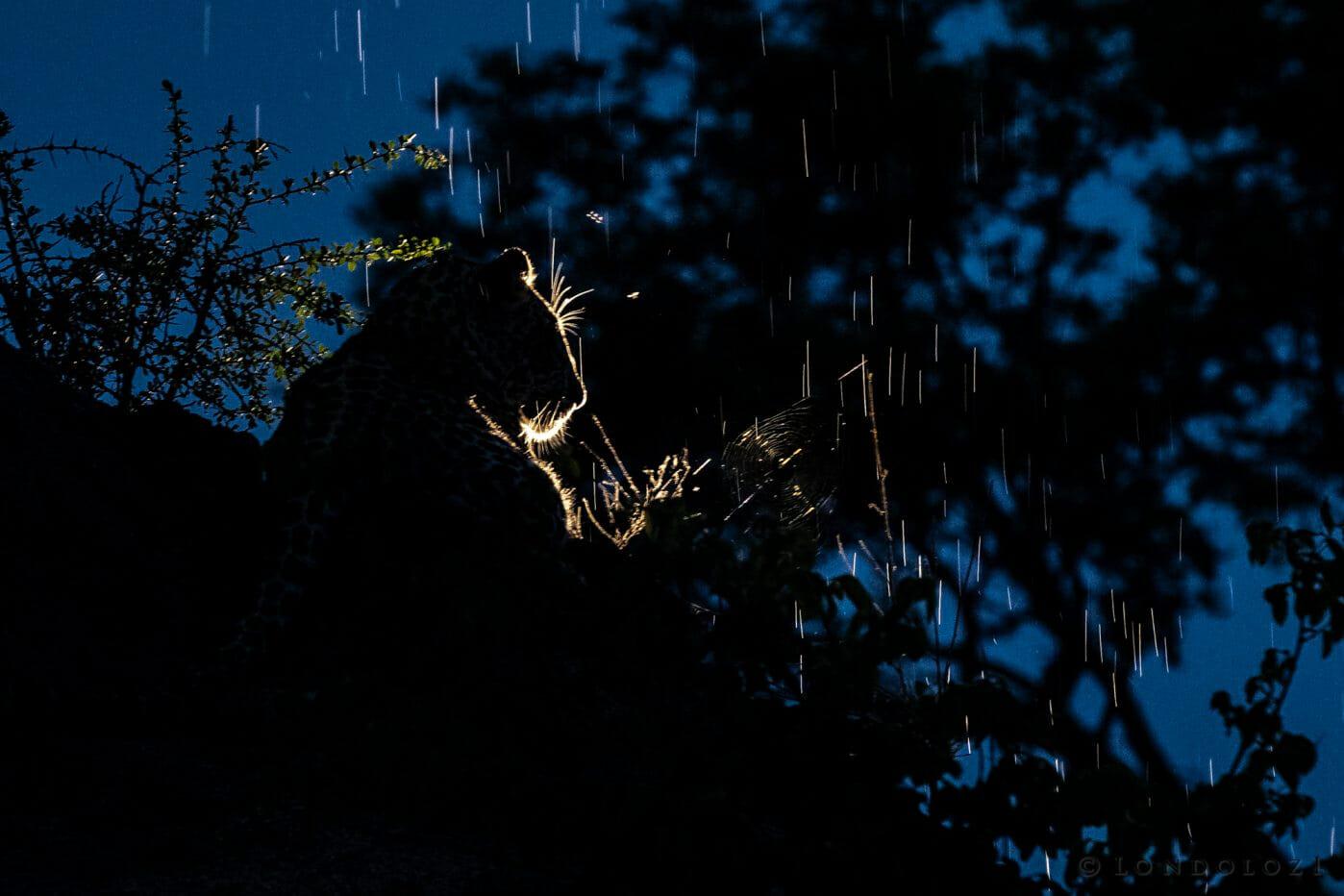 Ximungwe Leopard Backlight Rain Spotlight