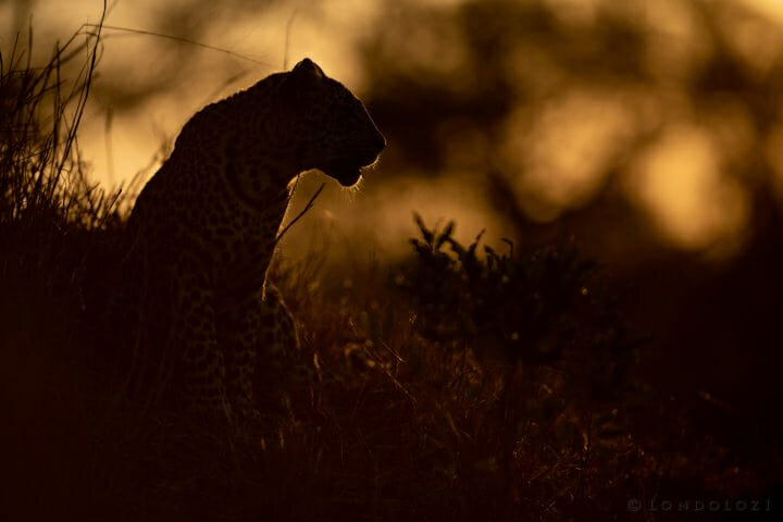 Backlit Ximungwe Jt 300mm F2.8 1 3200 Iso100 1 Of 1