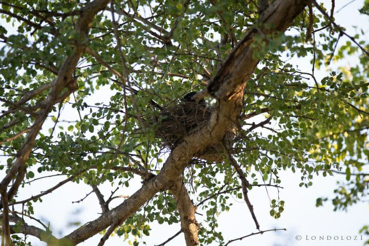Muystery Bird 21