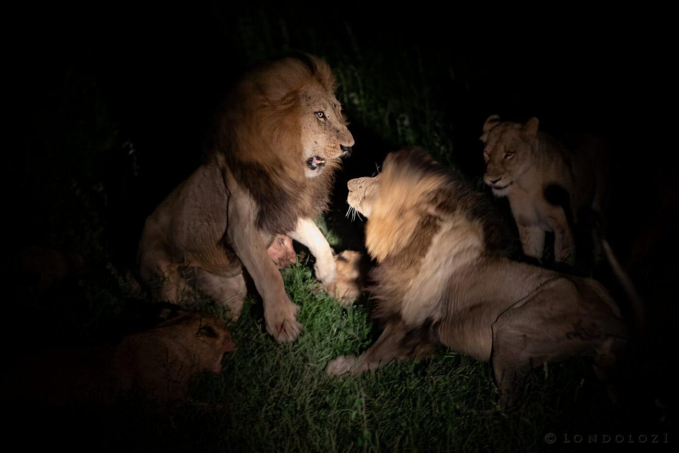 Birmingham Lion Fight