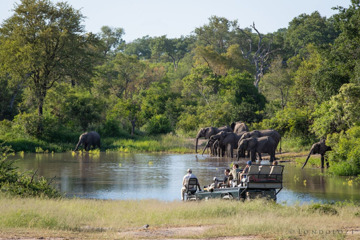 Elephants Waterhole Shingi Land Rover