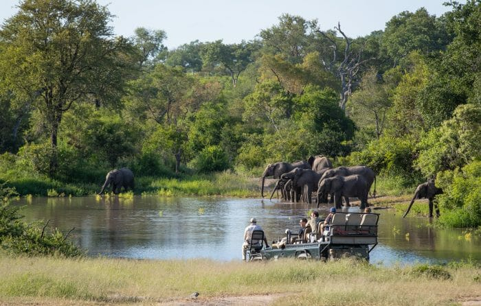 Elephants Waterhole Shingi Land Rover