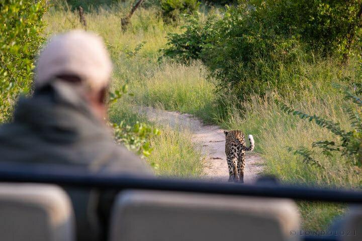 Leopard Road