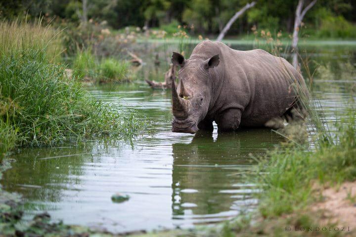 Rhino Waterhole