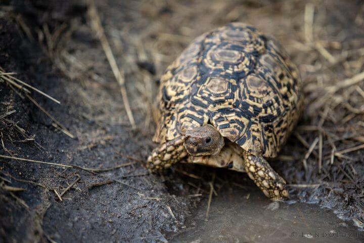 Tortoise Drink