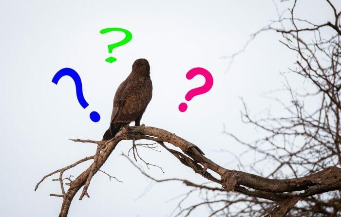 Mystery Bird 23