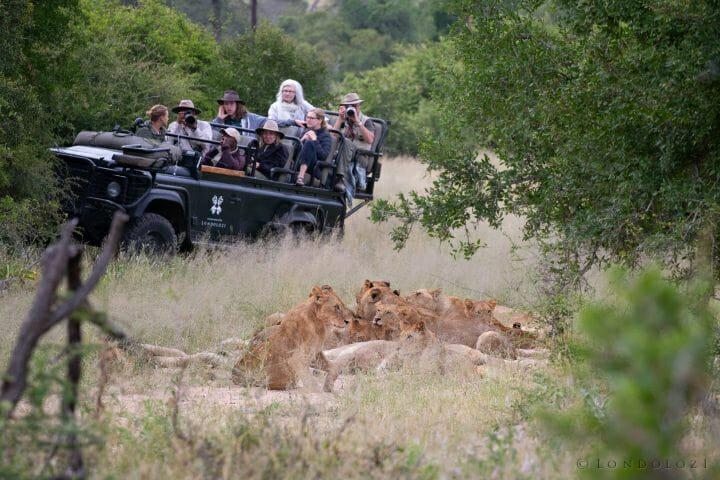 Ntsevu Lion Land Rover1