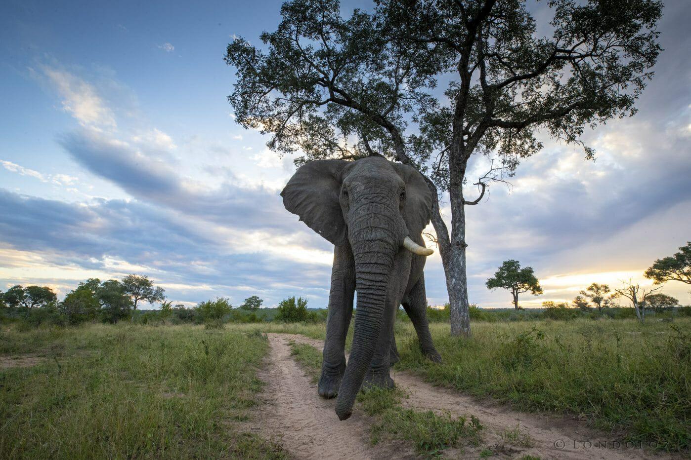Low Elephant Sunset