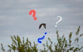 Mystery Bird Cover
