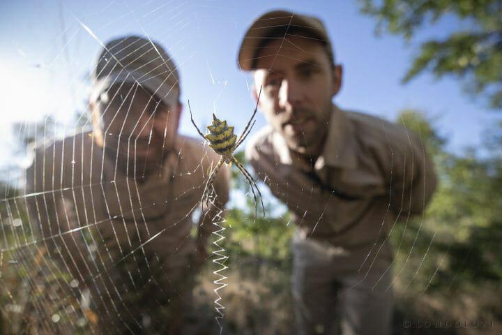 Spider Rangers