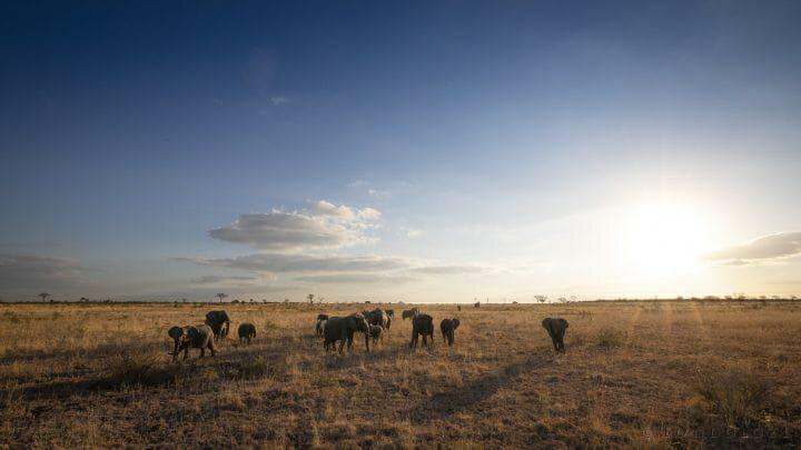 Elephants Open Areas