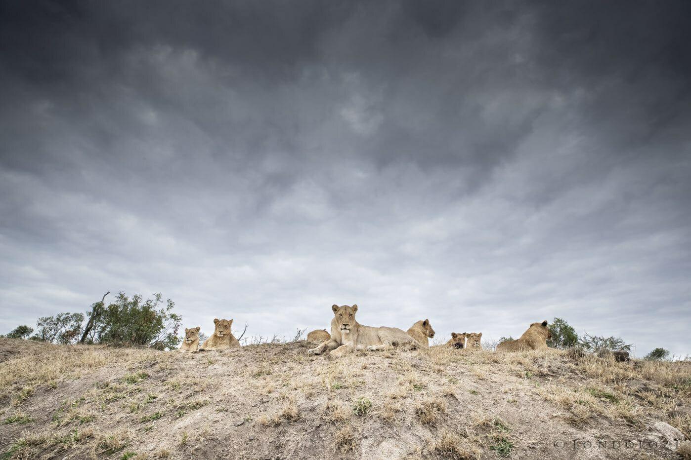 Lion Ntsevu Clouds