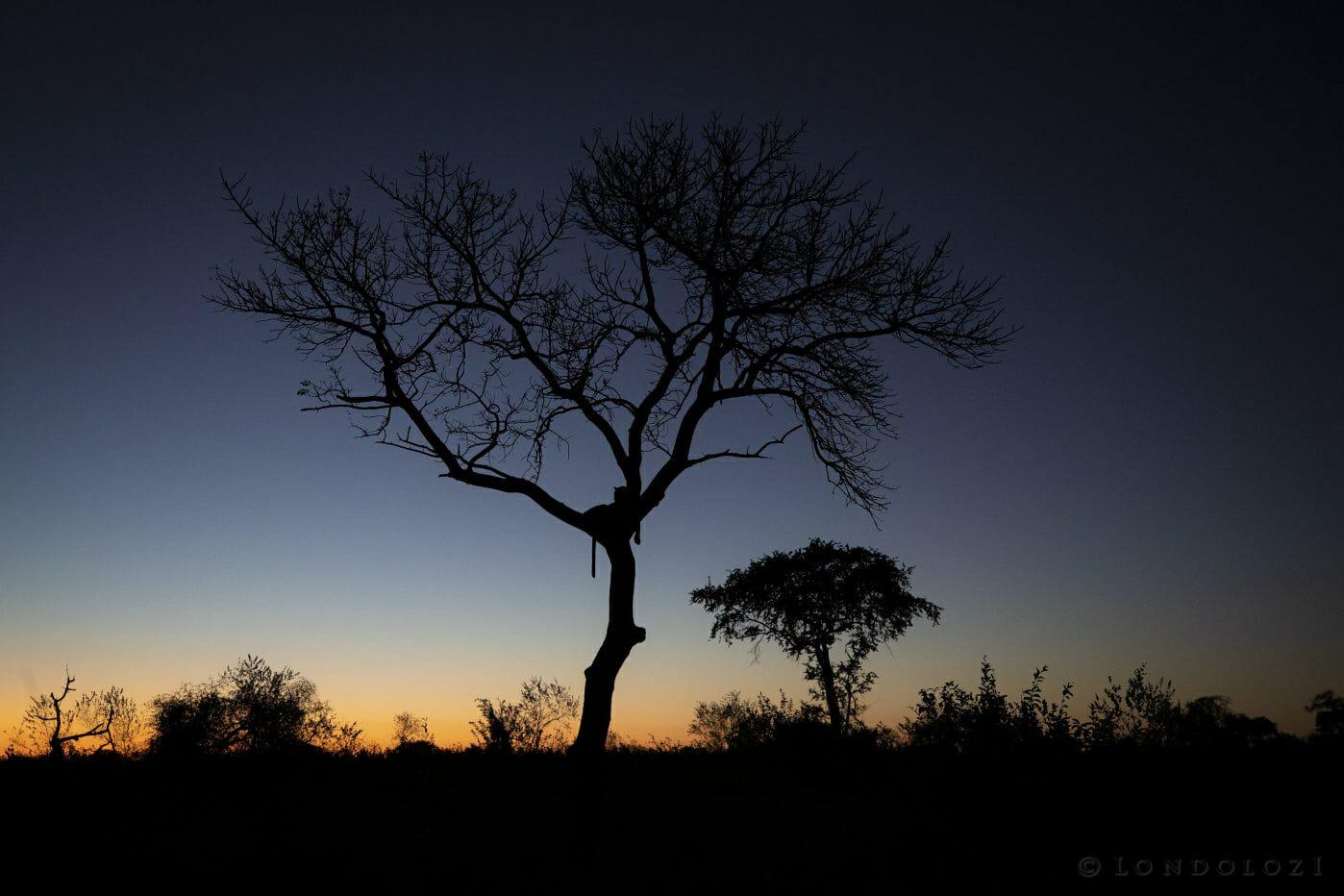 Mashaba Leopard Silhouette