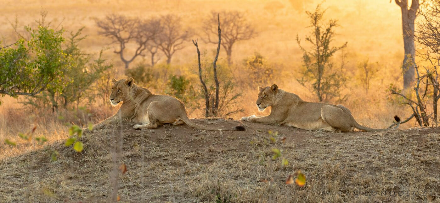 Ntsevu Lions Pt2020 2
