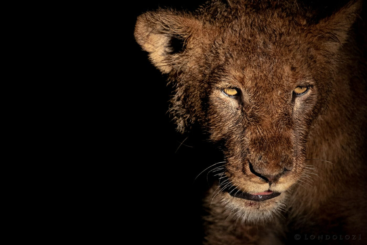 Ntsevu Lions Pt2020 1854