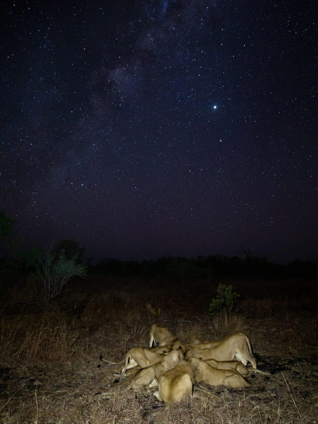 Ntsevu Lions Pt2020 2132
