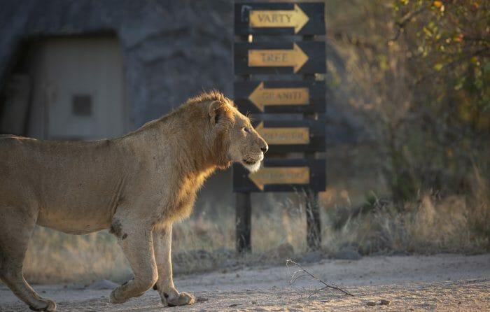 Styx Lion Sign