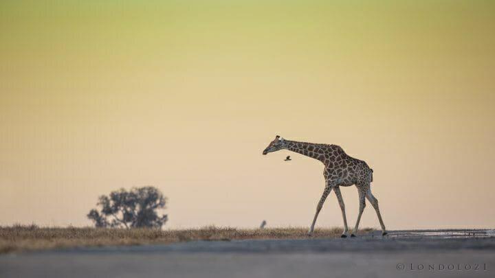 Giraffe Airstrip