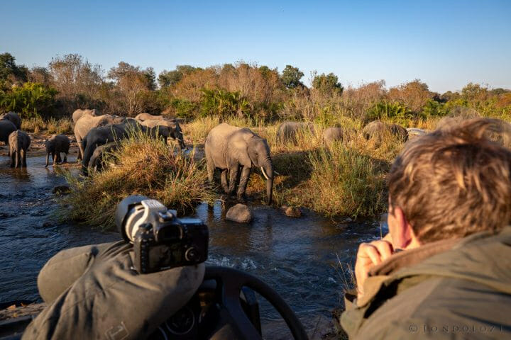 Guy Brunskill Watching Elephants Pt2020 9652