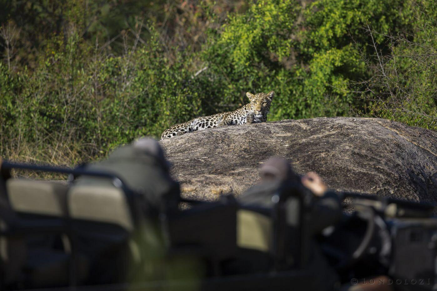 Finfoot Leopard Land Rover