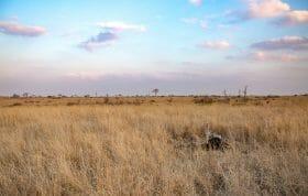 Ostrich On Nest Pt2020 9926