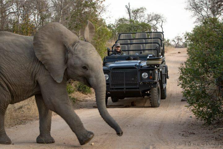 Elephant Pt2020 6872