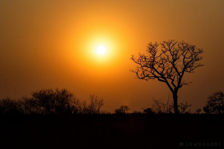 Sunset With Marula Pt2020 6829