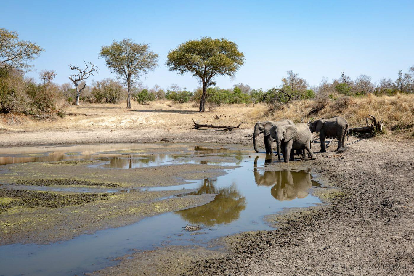 Elephants Drinking Vomba Dam 0231