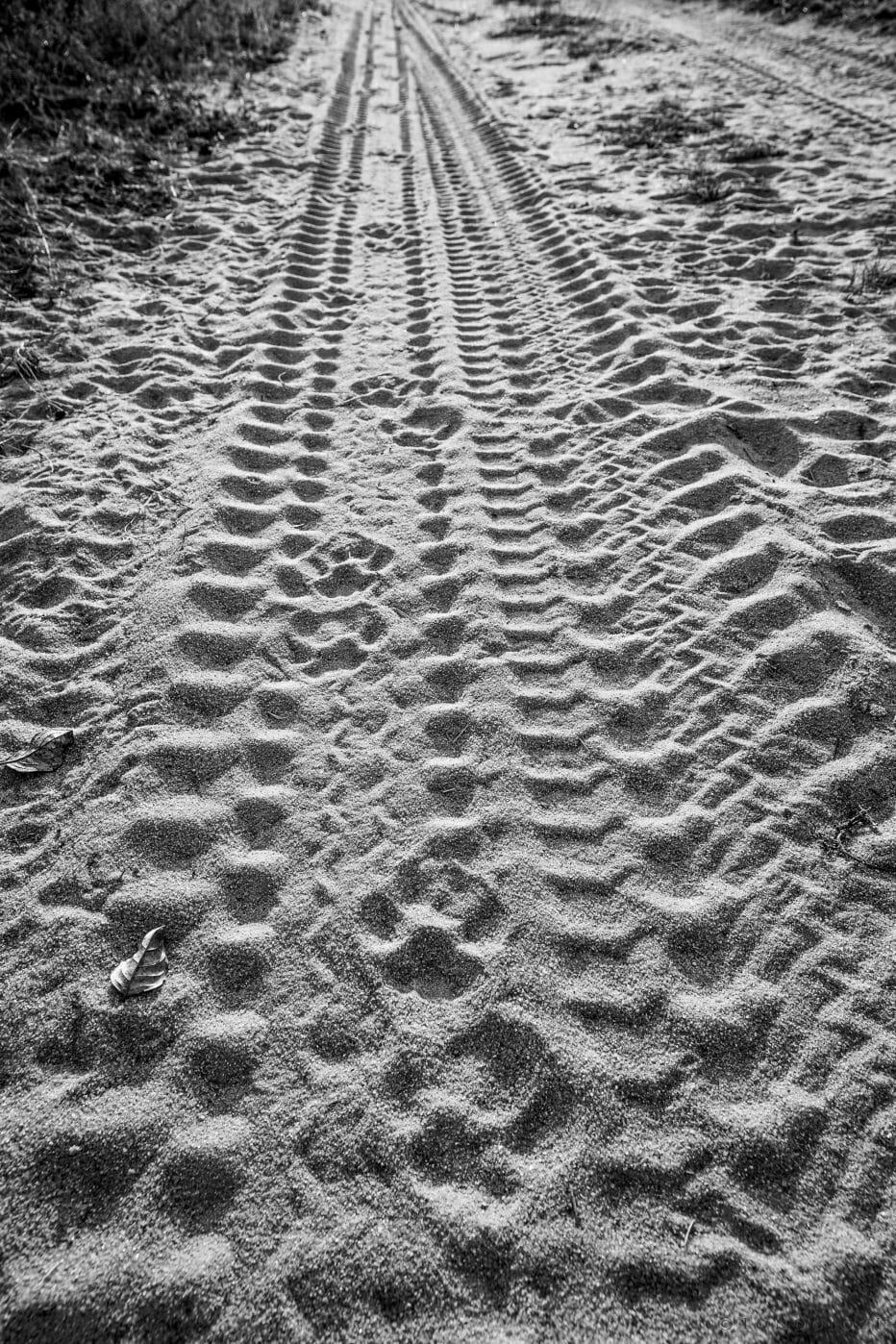 Leopard Tracks Black And White 0239