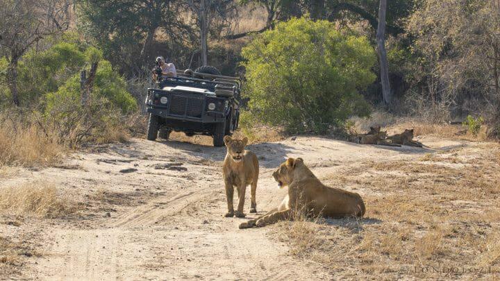 Nkuhuma Lions Jamo Land Rover
