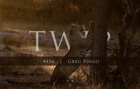 Twip Greg