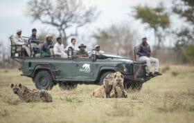 Tracker Academy Hyena