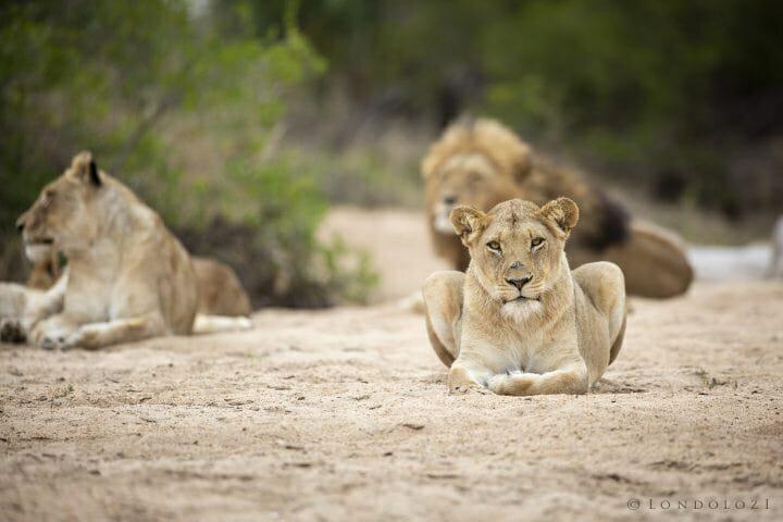 Mhangeni Lions