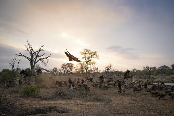 Vulture Sunset