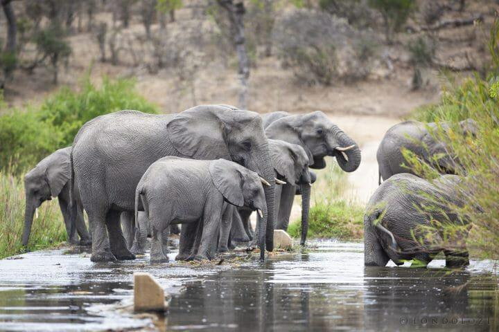 Elephant Drink Causeway