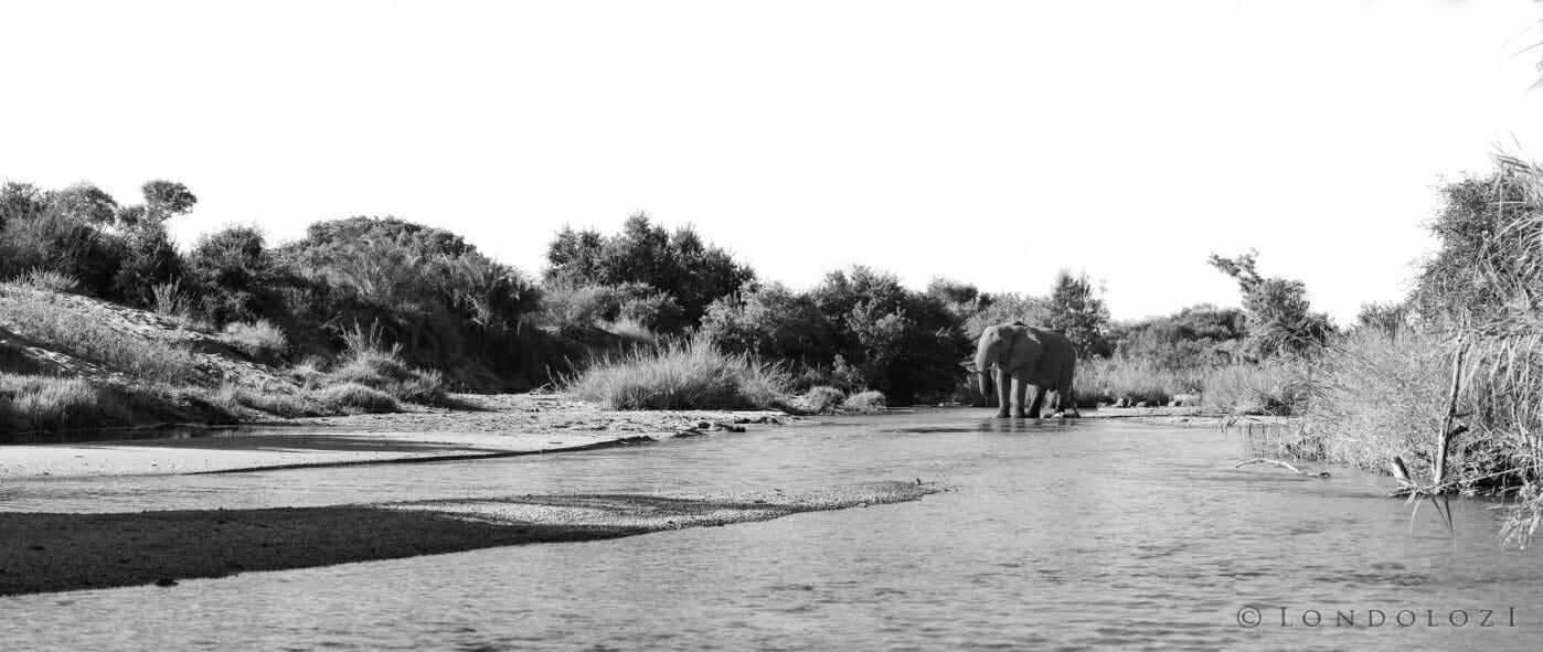 Elephant Sand River Pano