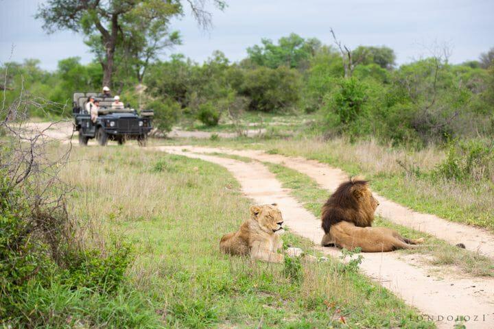 Ntsevu Othawa Lion Land Rover