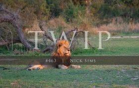 Twip 463