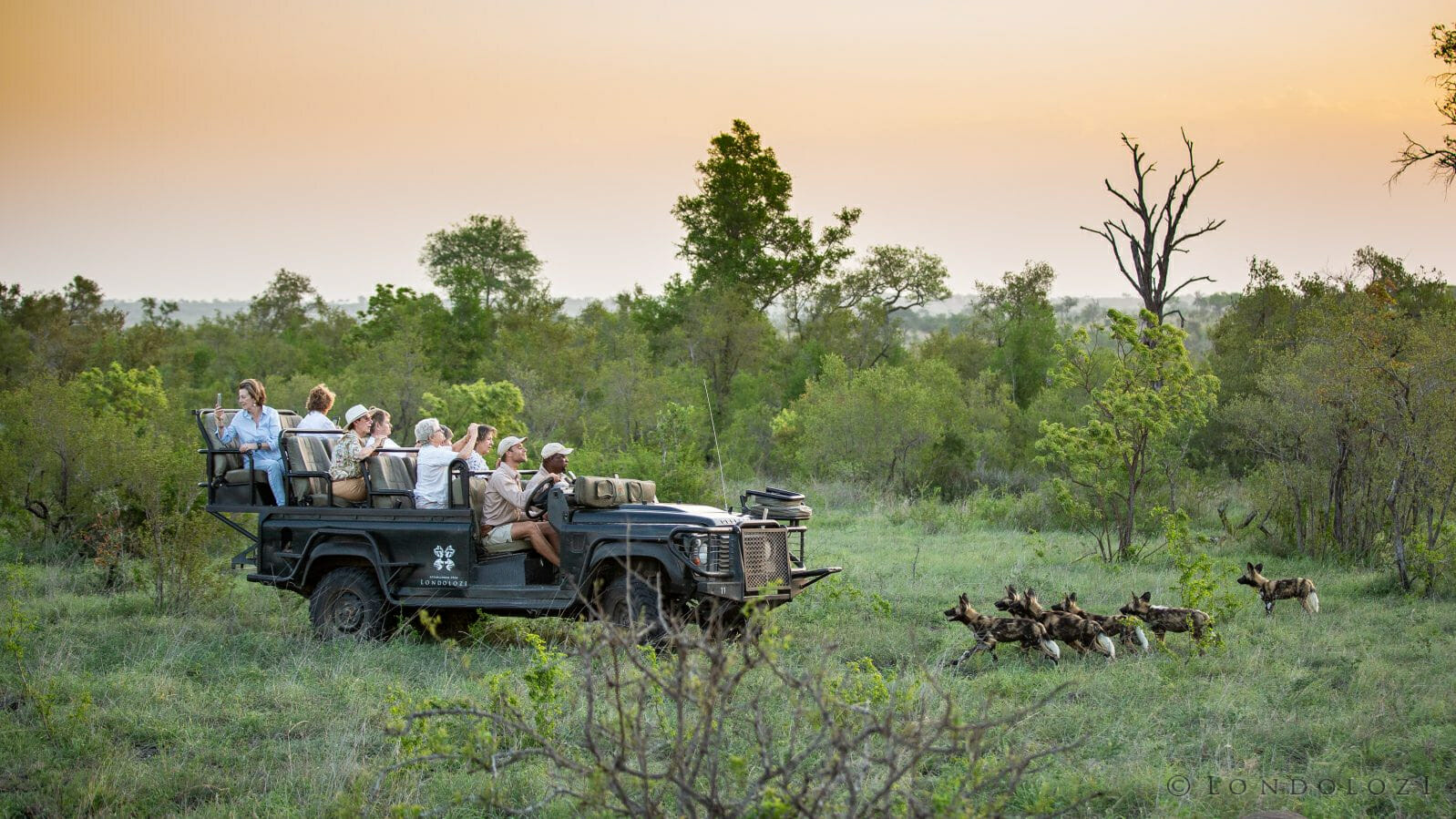 Land Rover Wild Dog Guest Nick Sims