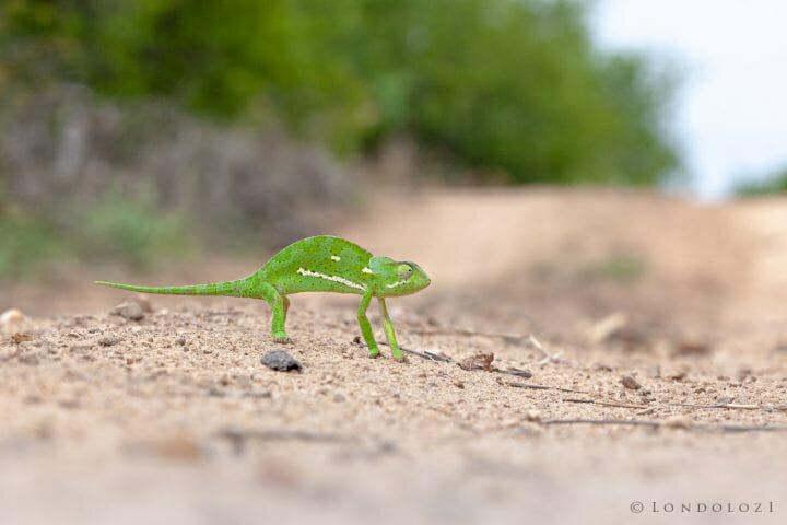 Chameleon 5100