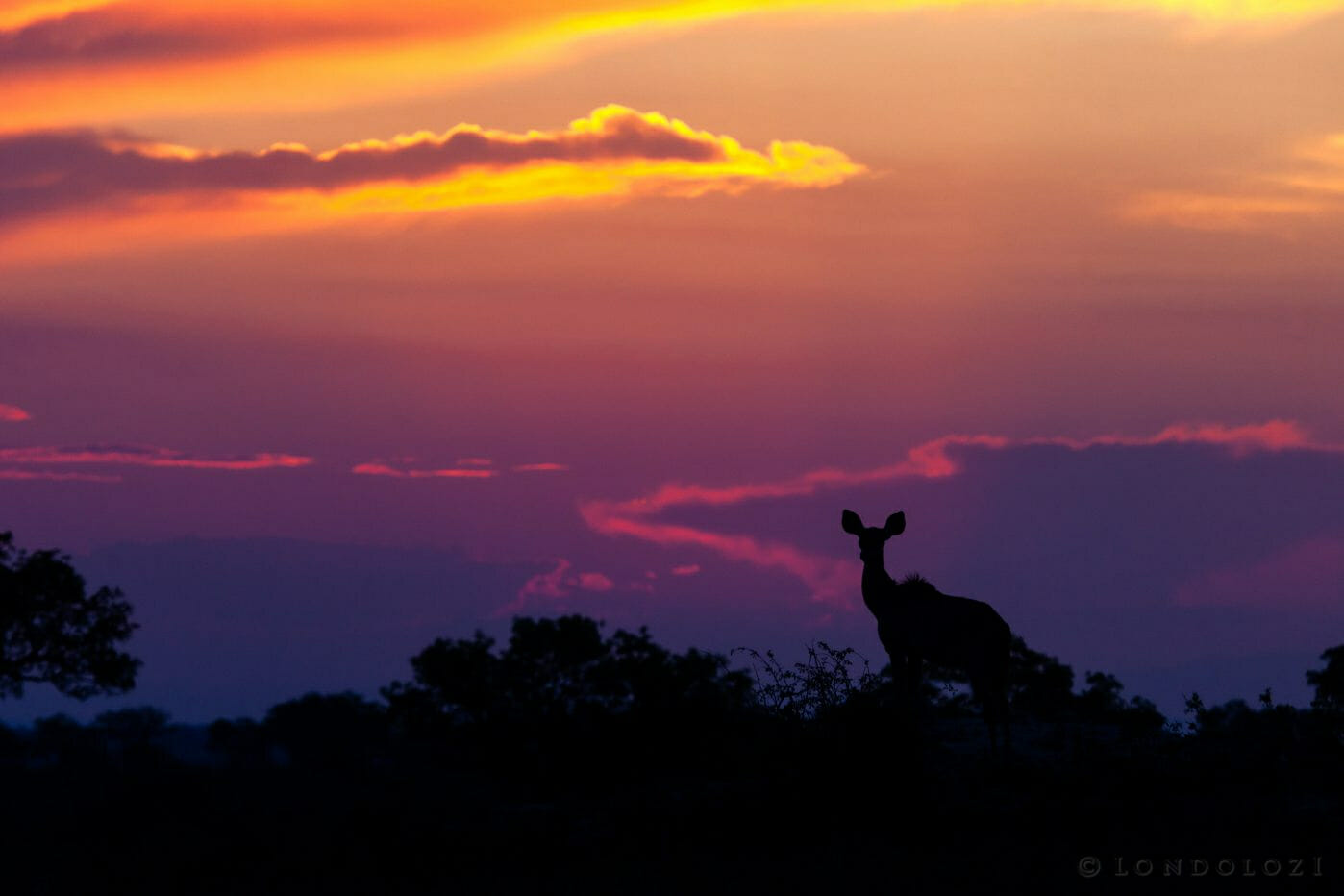 Kudu Silhouette With Sunset 1992