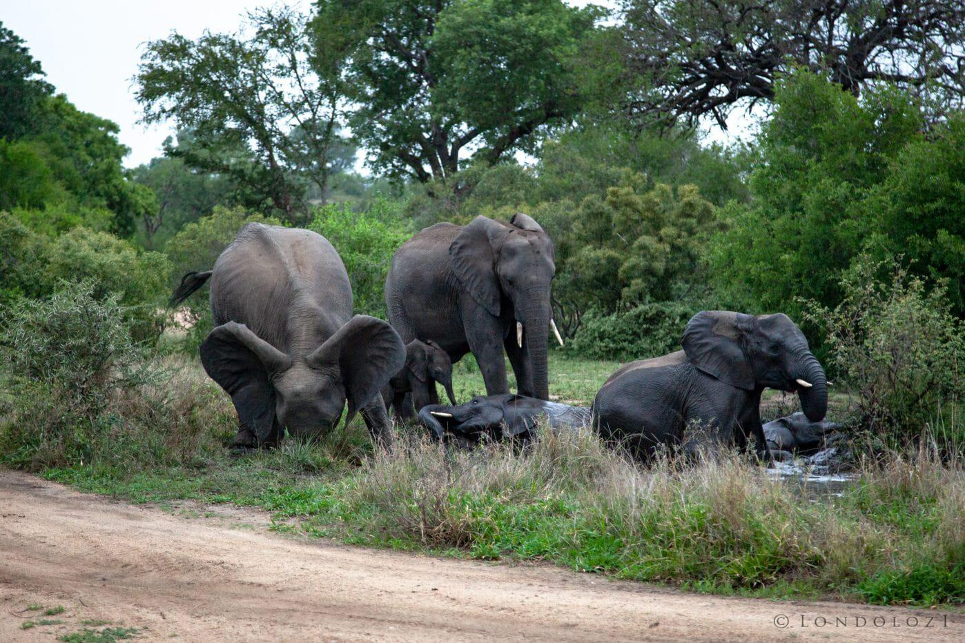 Elephant Blog 5275