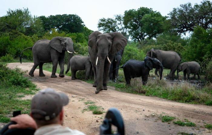 Elephant Blog 5276
