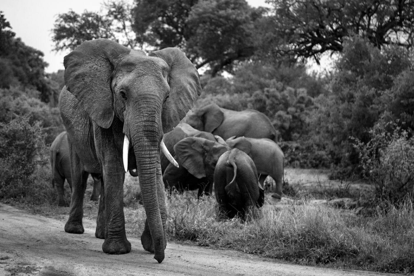 Elephant Blog 5278