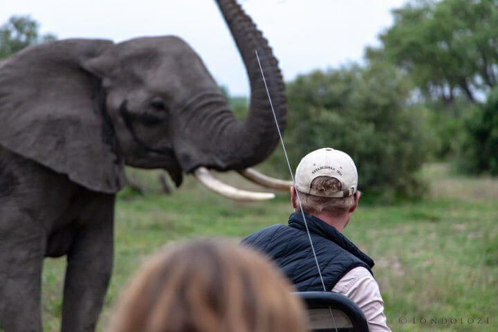 Elephant Blog 5285