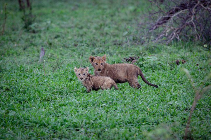 Mhangeni Pride Cubs PT 2020