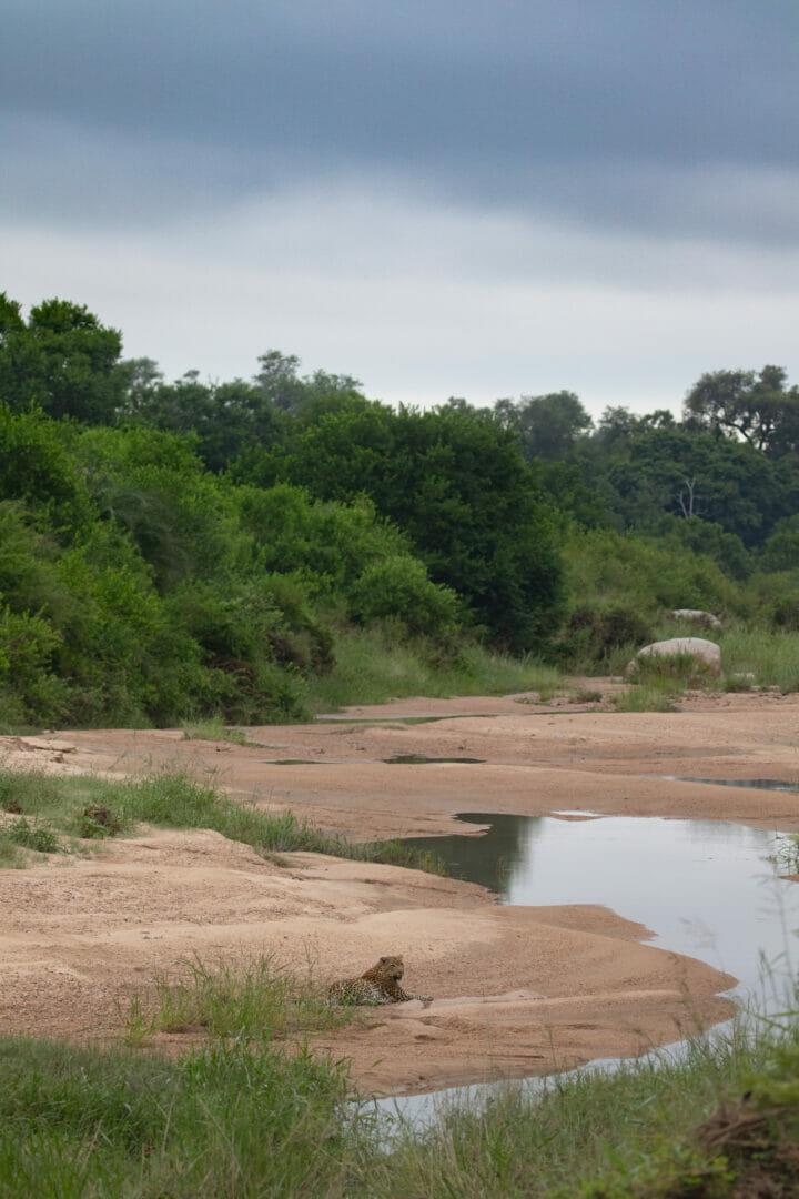 Nthanguleni female sand river