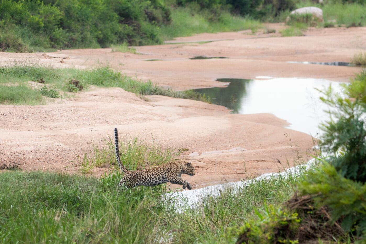 Nthanguleni female jumps