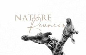 Blog Banner Giraffe