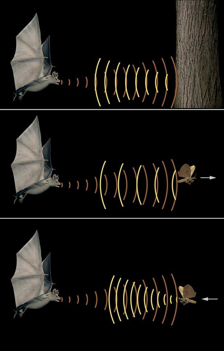 Bat Sonar 2